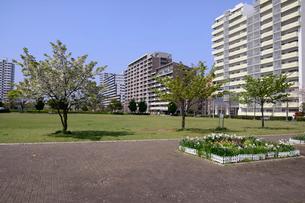 打瀬第二公園と幕張ベイタウンの写真素材 [FYI01542310]