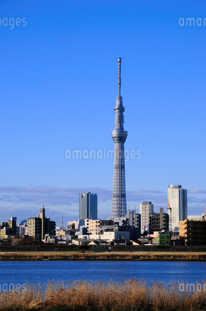 荒川土手より東京スカイツリーを望むの写真素材 [FYI01542808]