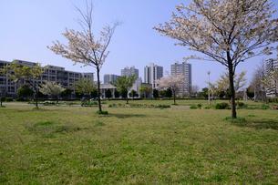 打瀬第二公園と幕張ベイタウンの写真素材 [FYI01542836]