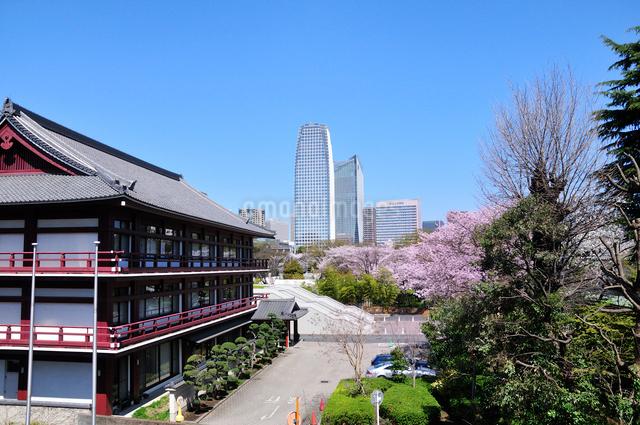 芝公園から見る愛宕、虎の門方面のビルの写真素材 [FYI01542929]