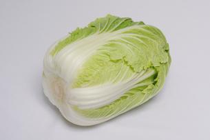 白菜の写真素材 [FYI01543130]