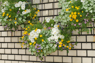 プランターの花飾りの写真素材 [FYI01543373]