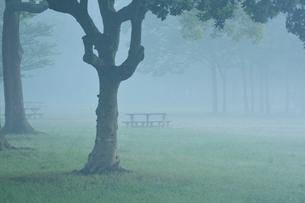 朝もやの水元公園中央広場の写真素材 [FYI01543380]