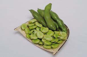 ソラ豆の写真素材 [FYI01543449]