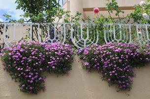プランターの花飾りの写真素材 [FYI01543488]