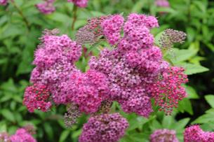 花のイメージの写真素材 [FYI01543510]