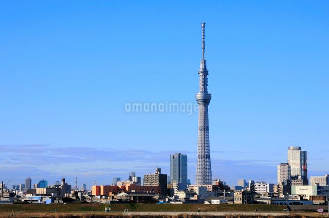 荒川土手より東京スカイツリーを望むの写真素材 [FYI01543577]
