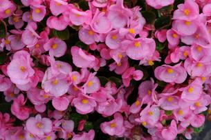 花のイメージの写真素材 [FYI01543730]