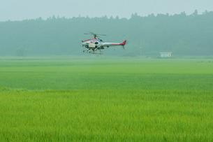 ラジコンによる農薬散布の写真素材 [FYI01543931]