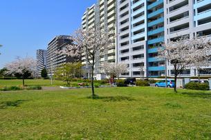 打瀬二丁目公園と幕張ベイタウンの写真素材 [FYI01544012]