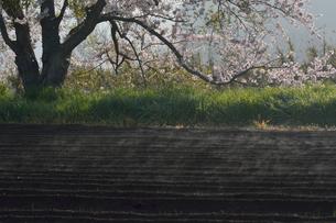 畑から上る水蒸気の写真素材 [FYI01544064]