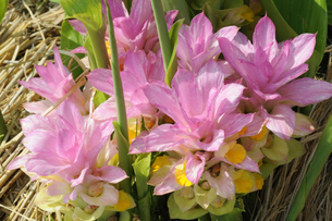 花のイメージの写真素材 [FYI01544157]