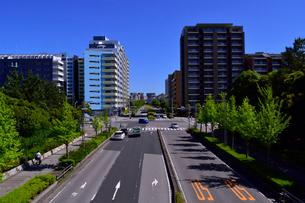 新緑と幕張ベイタウンの街並みの写真素材 [FYI01544244]