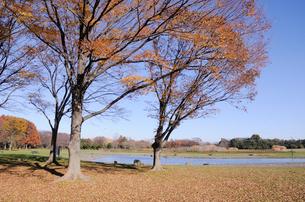 水元公園中央広場の写真素材 [FYI01544982]