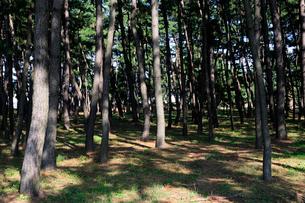 名勝気比の松原公園の風景の写真素材 [FYI01545161]