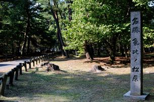 名勝気比の松原公園の風景の写真素材 [FYI01545253]