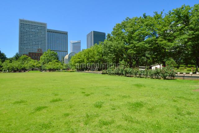 日比谷公園の新緑とビル群の写真素材 [FYI01545359]