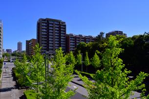 新緑と幕張ベイタウンの街並みの写真素材 [FYI01545379]