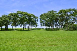水元公園中央広場の緑とケヤキの木々の写真素材 [FYI01545441]