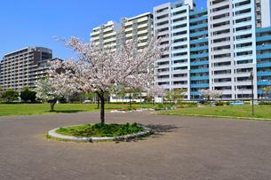 打瀬二丁目公園と幕張ベイタウンの写真素材 [FYI01545497]