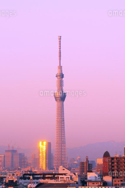 早朝の東京スカイツリーの写真素材 [FYI01545754]
