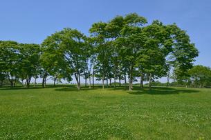 水元公園中央広場の新緑の写真素材 [FYI01546165]