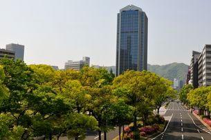 新緑・神戸市役所の写真素材 [FYI01546383]