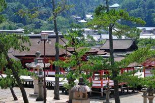 世界遺産・日本三景 夏の宮島厳島神社の写真素材 [FYI01546598]