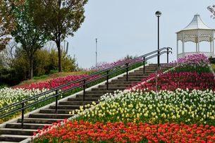 淡路島 国営明石海峡公園 ポップな階段花壇の写真素材 [FYI01546642]
