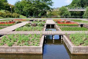 とっとり花回廊 園内の水上花壇の写真素材 [FYI01546696]