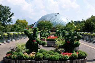 とっとり花回廊 園内菊のトピアリーからフラワードームの写真素材 [FYI01546752]