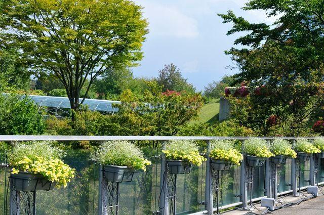 とっとり花回廊 園内花のオブジェの写真素材 [FYI01546761]