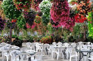 ベゴニアと観葉植物の憩いの広場の写真素材 [FYI01546772]