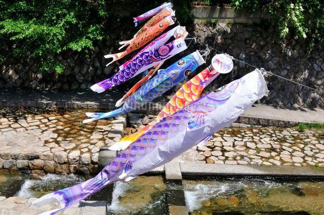 神戸 新緑の川に泳ぐ鯉のぼりの写真素材 [FYI01547090]