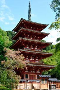 奈良 秋の総本山長谷寺五重塔の写真素材 [FYI01547113]