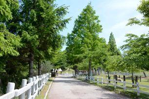 神戸市立六甲山牧場・新緑のイメ-ジの写真素材 [FYI01547513]