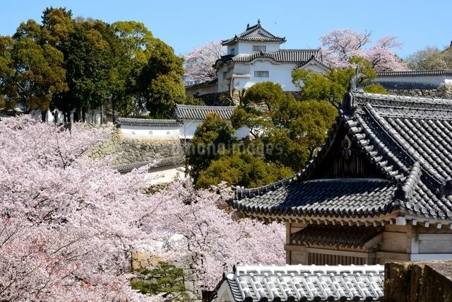 桜が咲く姫路城 西の丸庭園から菱の門の写真素材 [FYI01547555]