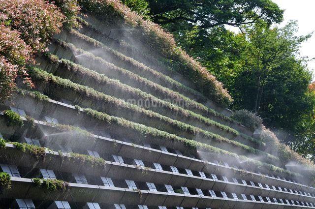 とっとり花回廊 園内霧の庭園の写真素材 [FYI01547613]