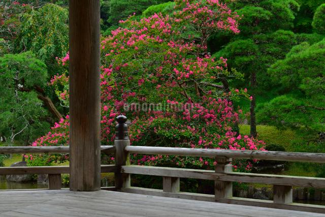 成田山公園の写真素材 [FYI01547672]