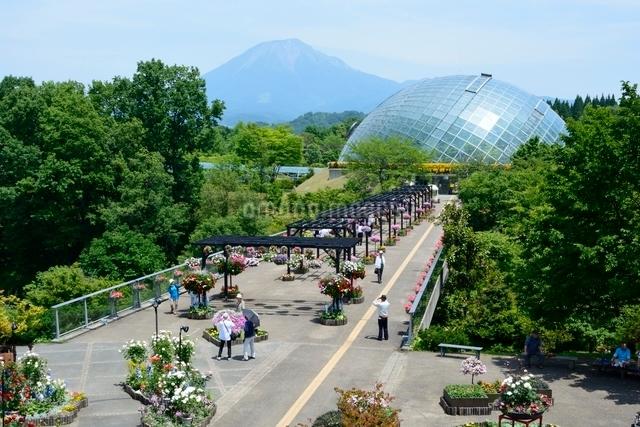 とっとり花回廊,フラワド-ムと大山の写真素材 [FYI01547739]