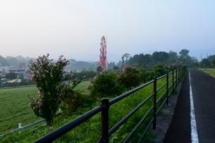 蒜山高原夜明けの写真素材 [FYI01547846]