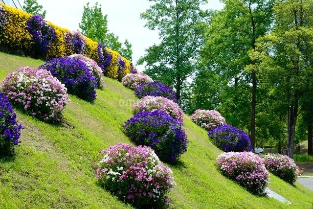 とっとり花回廊,フラワド-ムの写真素材 [FYI01547958]