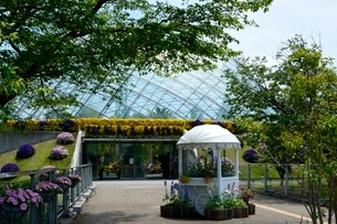 とっとり花回廊,フラワ-トレインの写真素材 [FYI01548050]