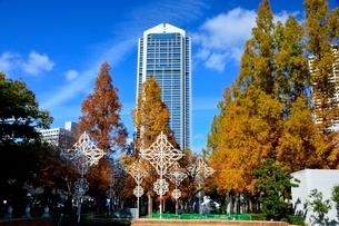 紅葉,神戸市役所の写真素材 [FYI01548398]