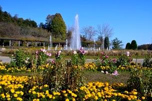 兵庫県立,紅葉のフラワ-センタ-四季の花壇と噴水の写真素材 [FYI01548694]