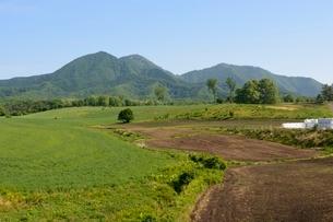 新緑,蒜山高原の写真素材 [FYI01548702]