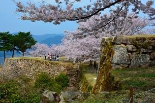 桜咲く竹田城跡 三の丸の写真素材 [FYI01548772]