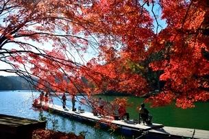 京都,嵐山-高雄パークウェイ,紅葉の菖蒲谷池の写真素材 [FYI01548776]