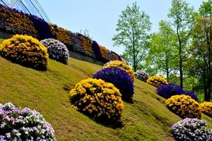 とっとり花回廊,フラワードームの写真素材 [FYI01548895]