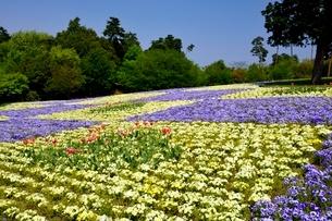 とっとり花回廊,花の丘の写真素材 [FYI01548930]